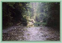 Bach Biely potok