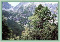 Niederung Mengusovská dolina